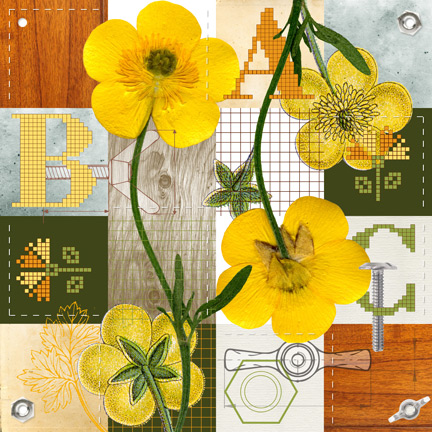 Buttercup by Anne Chesnut